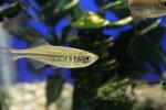 Czy hodowla rybek w akwarium to  ciekawe hobby?