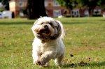 Czemu produkty zwierzęce warto nabywać online? – karmy dla psów