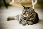 W jaki sposób najlepiej troszczyć się o  zdrowie swojego kota?