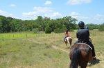 W jaki sposób przyuczyć się jazdy konnej? Najlepiej wybrać się na obóz konny.