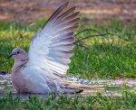 Wspaniałe towary dla gołębi takie jak Clearify, które znacząco pomogą w ich hodowli